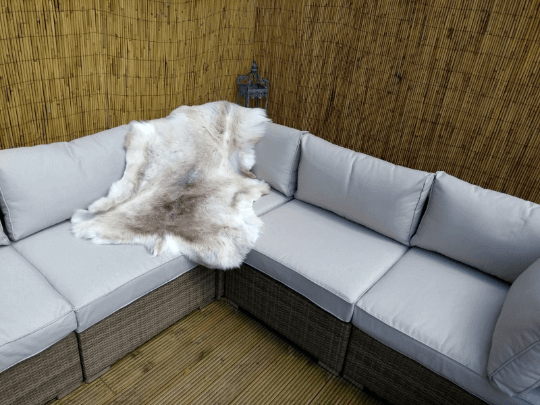 Two Hide Collection Of Rare Breed White Nordic Reindeer Hide Rugs